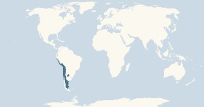 Andean condor range