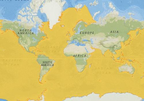Humpback Whale Distribution Map
