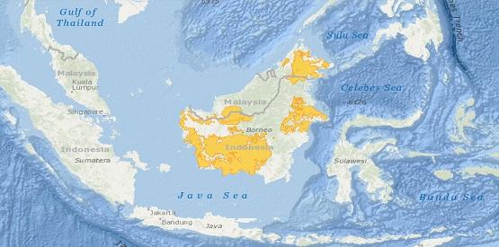 Bornean Orangutan distribution map