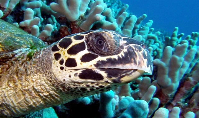 What Are the Main Physical Characteristics of Turtles?
